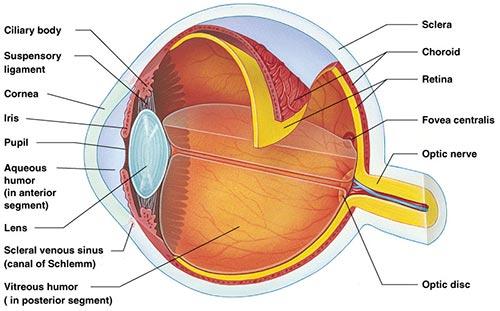 eye nyc optometrist ophthalmologist   eye doctors