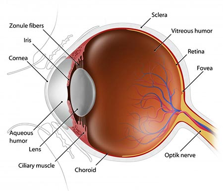Corneal Arcus (Arcus Senilis) Treatment NYC